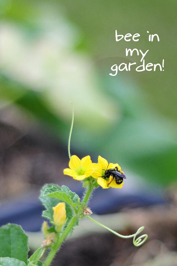 071213-raised-urban-gardens-dot-com--pic--20