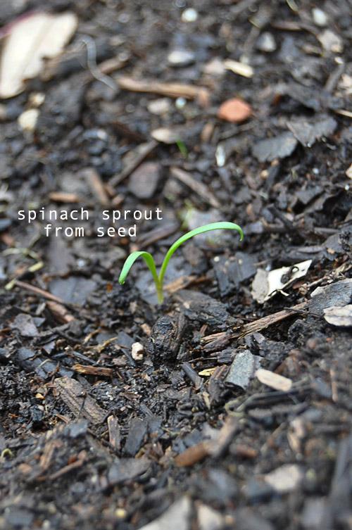1224-new-way-to-garden-raised-urban-gardens-12