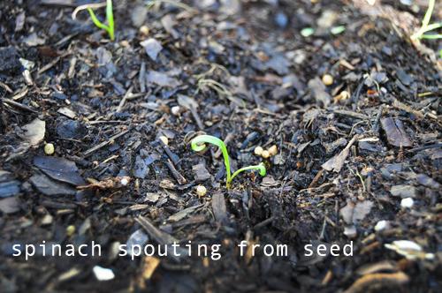 1224-new-way-to-garden-raised-urban-gardens-16