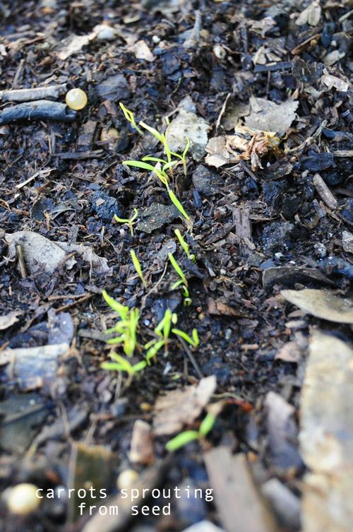 1224-new-way-to-garden-raised-urban-gardens-23