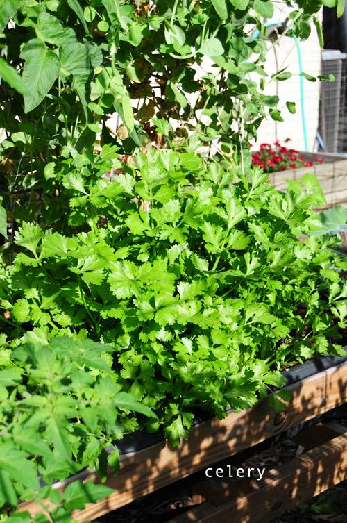 1224-new-way-to-garden-raised-urban-gardens-29