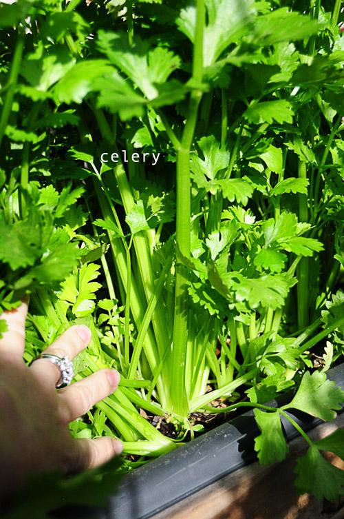 1224-new-way-to-garden-raised-urban-gardens-30