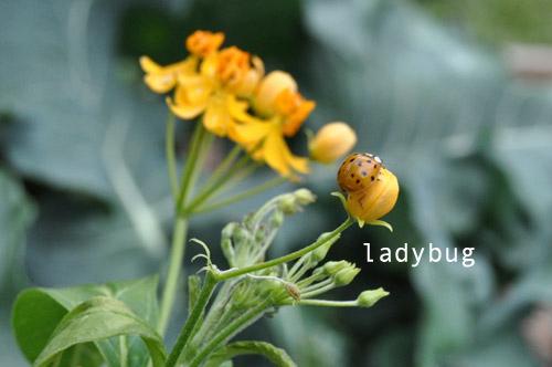 1224-new-way-to-garden-raised-urban-gardens-5