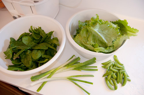 spinach, lettuce, onion and sugar snap peas harvested on Sunday for dinner