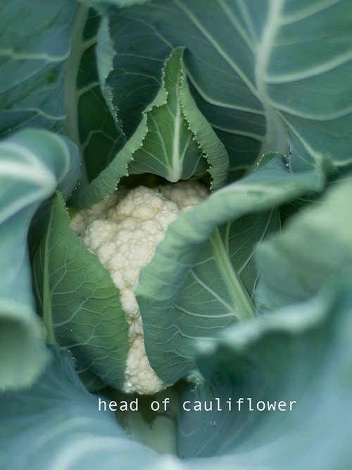how-to-build-a-garden-raised-gardening-table-garden-4