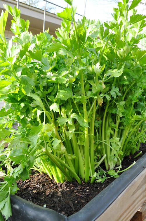 how-to-build-a-garden-raised-urban-garden-030913-33