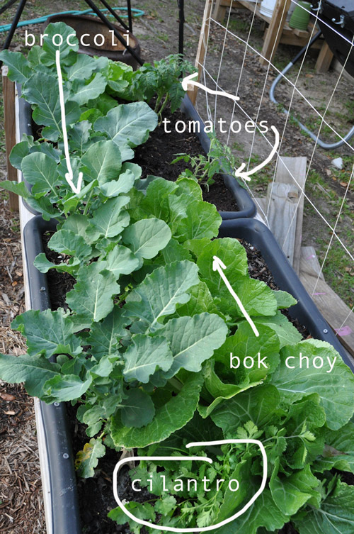 how-to-build-a-garden-raised-urban-garden-030913-51