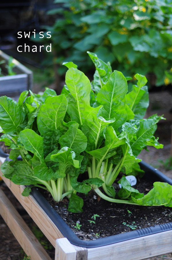 how-to-garden-in-a-raised-bed-raised-urban-gardens-050813---12