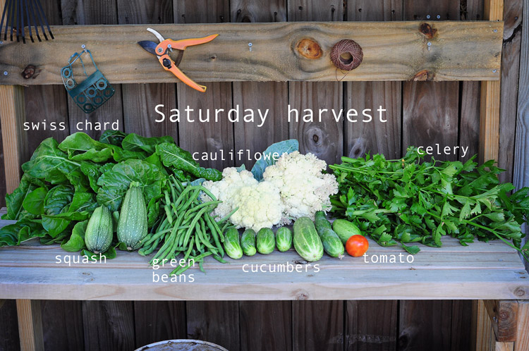 how-to-garden-in-a-raised-bed-raised-urban-gardens-050813---24