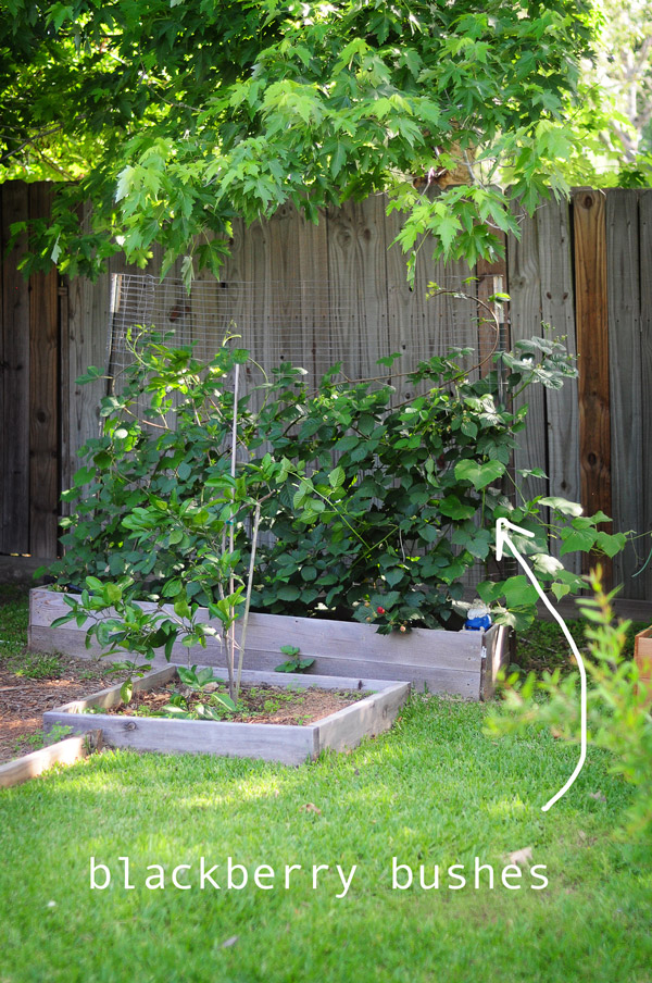how-to-garden-in-a-raised-bed-raised-urban-gardens-050813---35