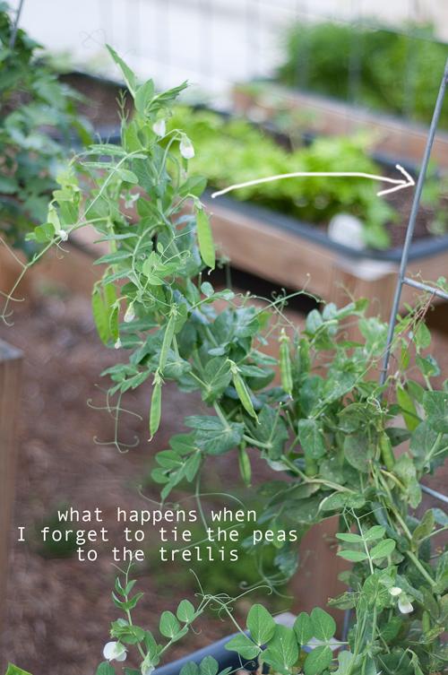 how-to-garden-raised-bed-gardening-040213---6