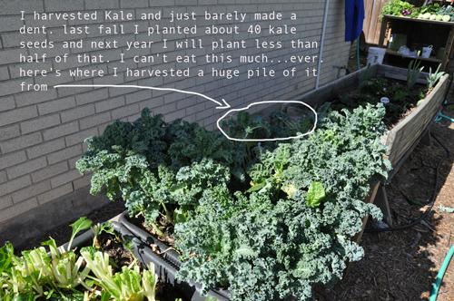 how-to-garden-raised-beds-gardening-urban-Melanie-Ellsworth-elevated-gardening-15