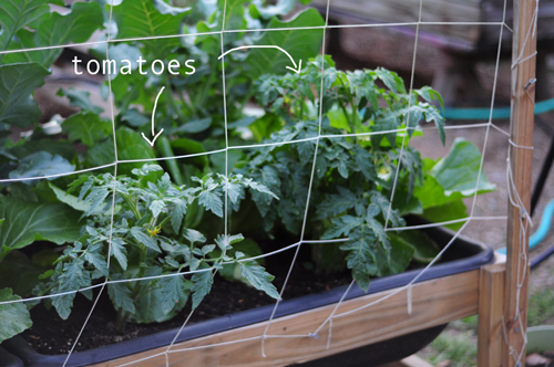 how-to-garden-raised-beds-gardening-urban-elevated-beds-23