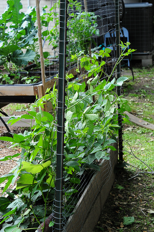 how-to-garden-raised-urban-gardens--042613-raised-bed-gardening-37