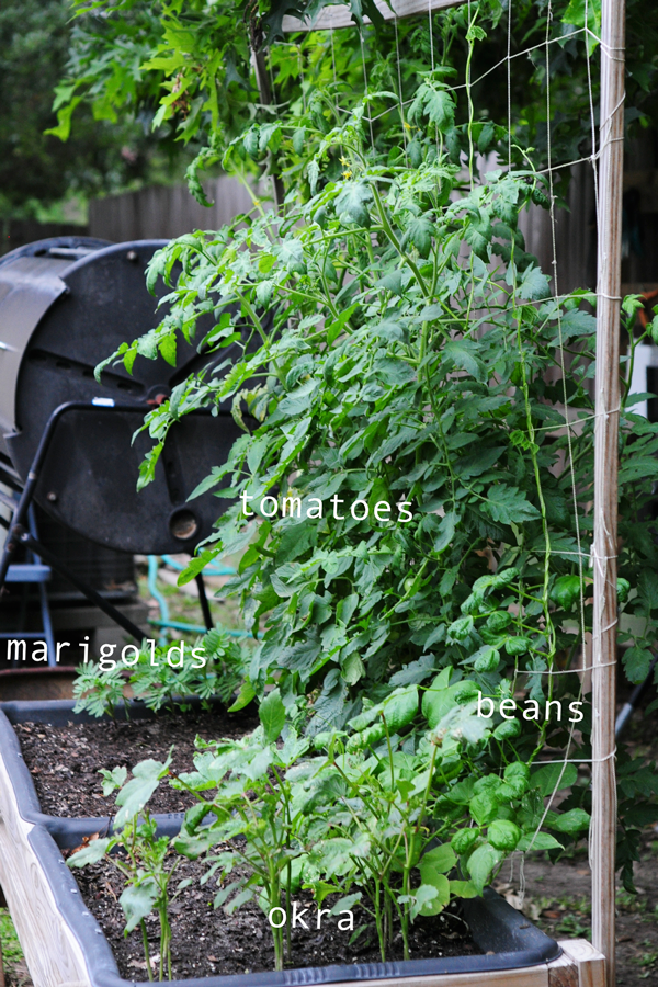 how-to-grow-a-raised-bed-garden-may-242013-mel-at-raised-urban-gardens-35