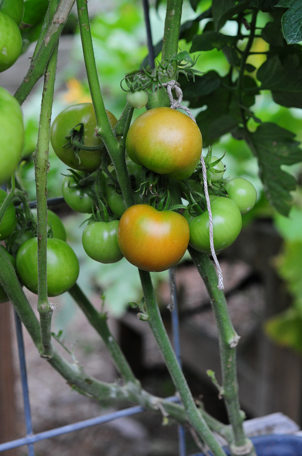 how-to-grow-a-raised-bed-garden-may-242013-mel-at-raised-urban-gardens-45