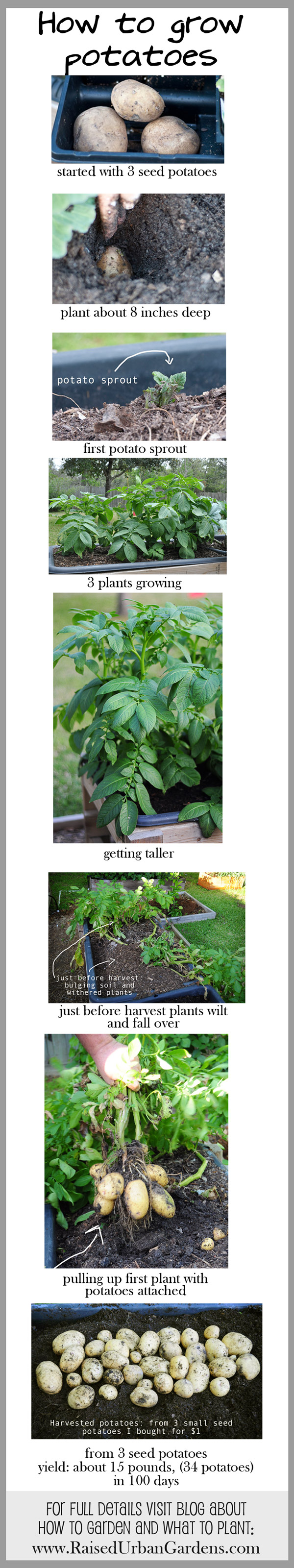 how-to-grow-potatoes-tall-pin
