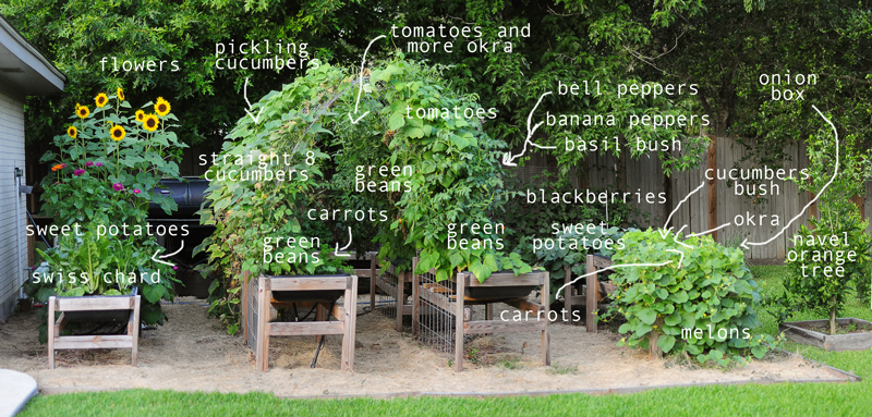 labeled-garden-pic