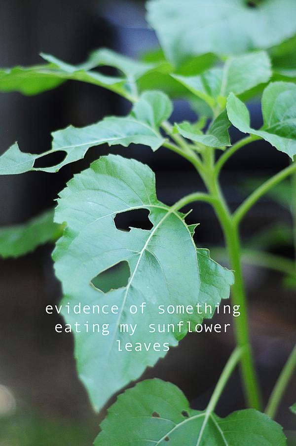 leaf-eater-evidence