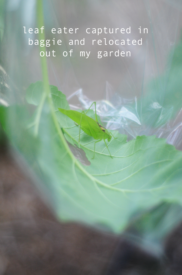 leaf-eater-relocated-out-of-garden