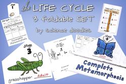 life-cycle-thumbnail
