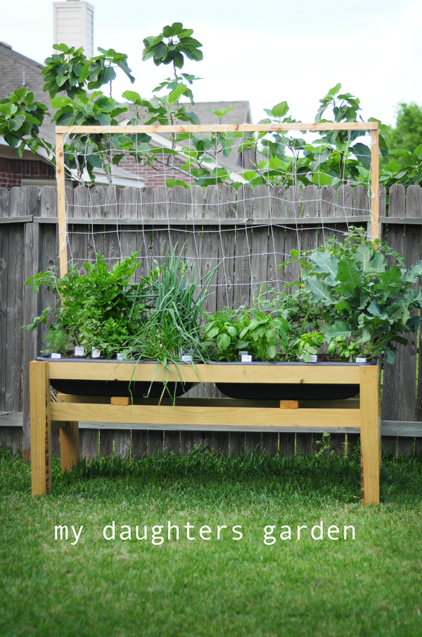 my-daughters-garden-picture-042313-how-to-garden-raised-urban-gardens