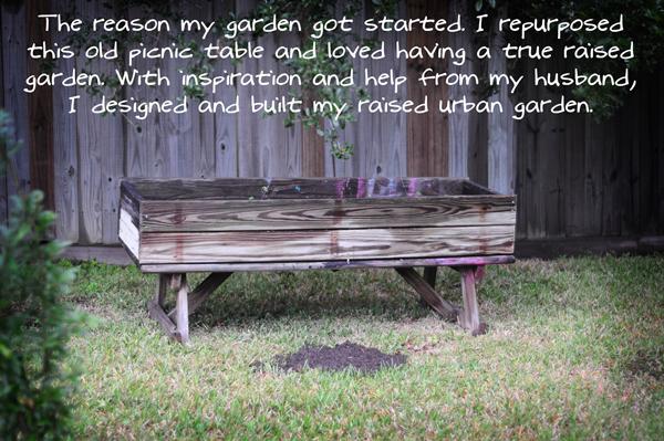 raised-urban-gardens-dot-com-fall-garden-pictures-1013---pic-20