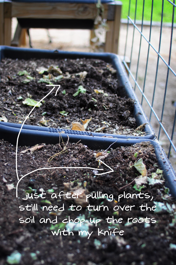 raised-urban-gardens-how-to-garden-flowers-new-soil-and-planting-070213-pic-16