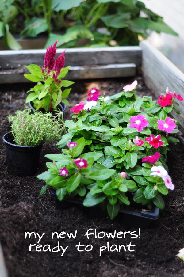raised-urban-gardens-how-to-garden-flowers-new-soil-and-planting-070213-pic-36