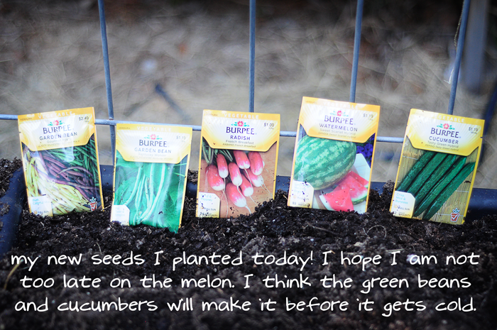 raised-urban-gardens-how-to-garden-flowers-new-soil-and-planting-070213-pic-43