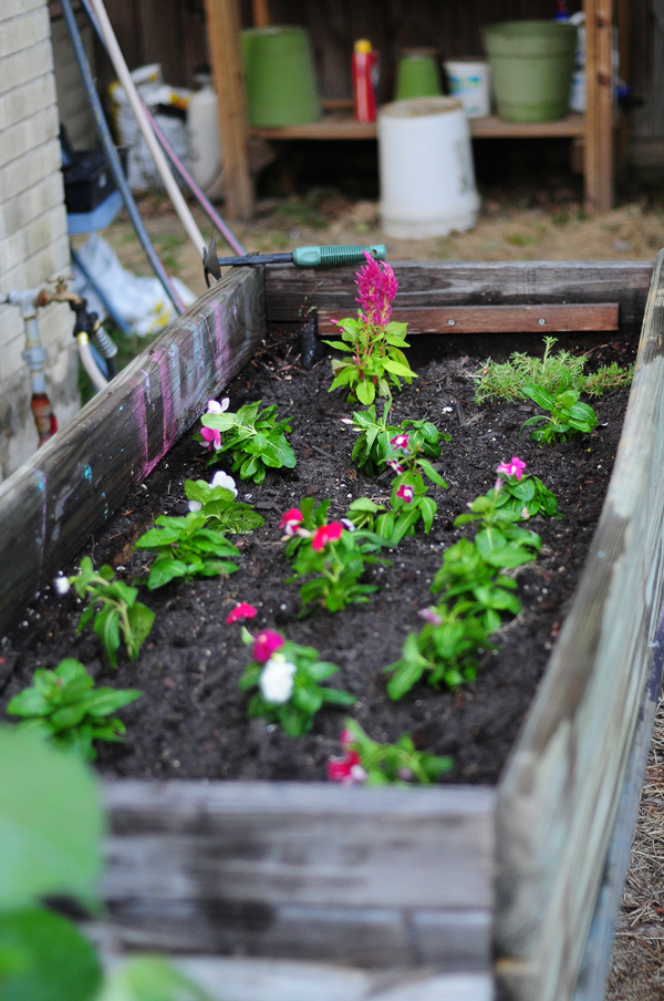 raised-urban-gardens-how-to-garden-flowers-new-soil-and-planting-070213-pic-52