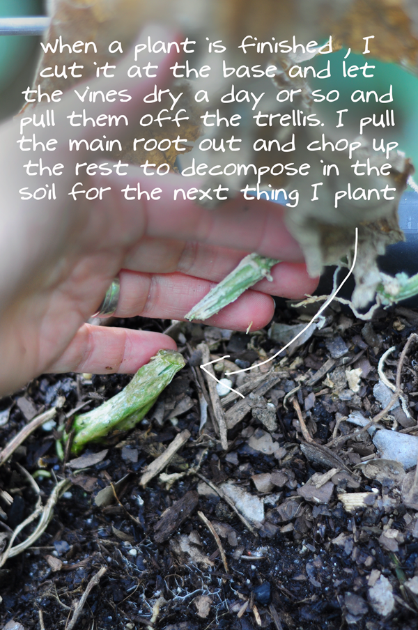 raised-urban-gardens-how-to-garden-flowers-new-soil-and-planting-070213-pic-9