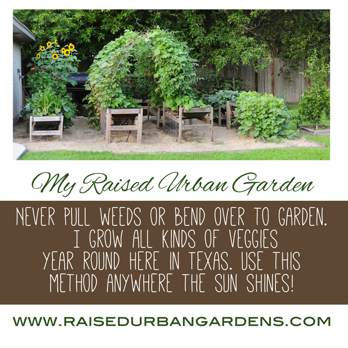 raised-urban-gardens-never-pull-weeds