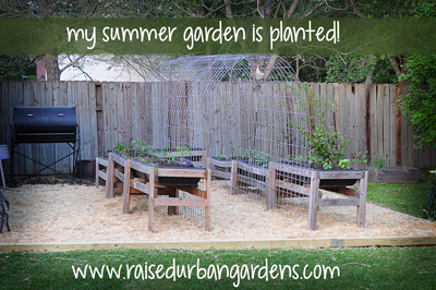 summer-garden-planted-raisedurbangardens