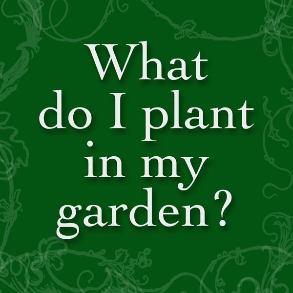 Faq what should i plant raised urban gardens for What should i plant in my garden